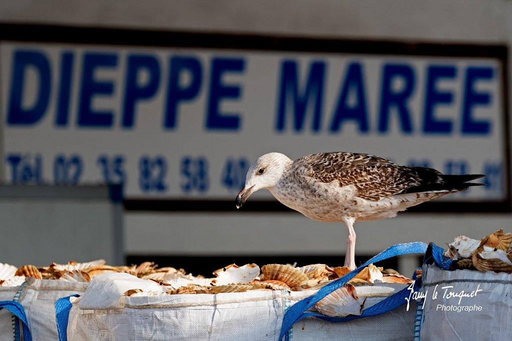 Dieppe-0062.jpg
