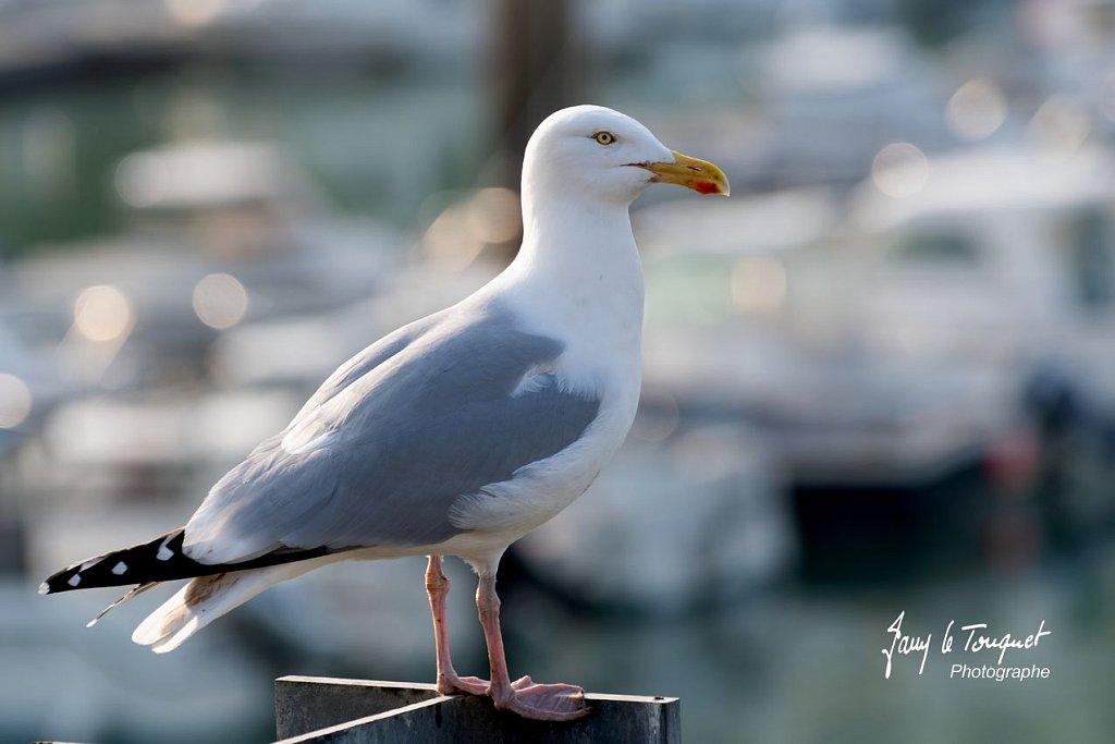 Dieppe-0076.jpg